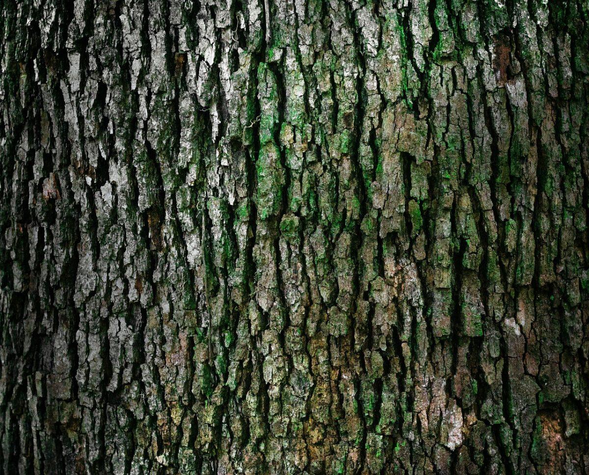 Piękny oraz {schludny zieleniec to nie lada wyzwanie, przede wszystkim jak jego konserwacją zajmujemy się sami.
